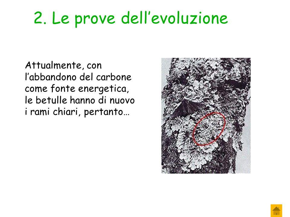 2. Le prove dell'evoluzione A partire dal 1845 le farfalle scure aumentarono progressivamente tanto che nel 1895 erano il 98% della popolazione. A che