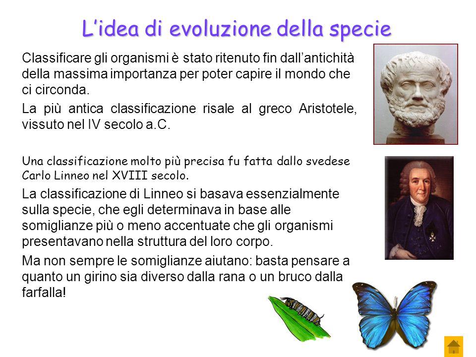 Classificazione degli organismi Gli esseri viventi sono ordinati in base a criteri logici e facilmente comprensibili: fare ciò significa operare una c