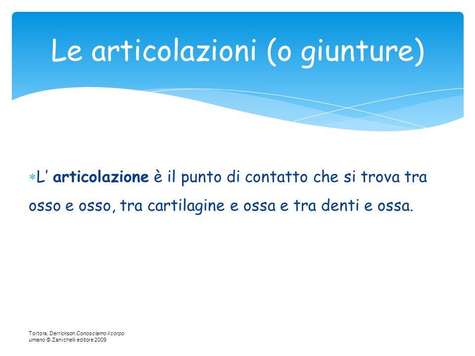  L' articolazione è il punto di contatto che si trova tra osso e osso, tra cartilagine e ossa e tra denti e ossa. Tortora, Derrickson Conosciamo il c