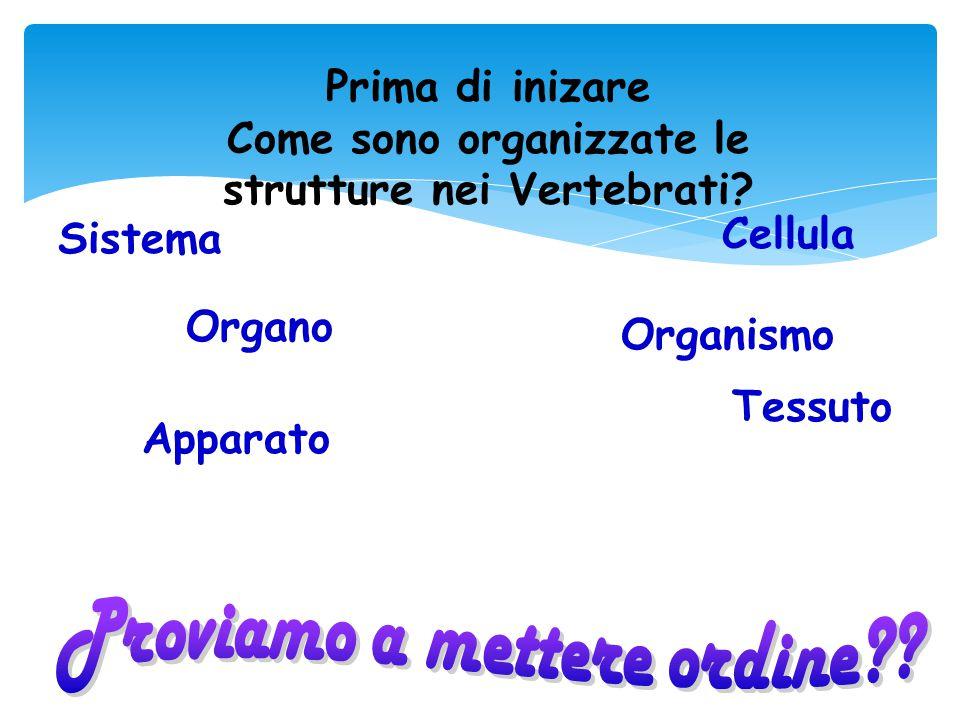Prima di inizare Come sono organizzate le strutture nei Vertebrati? Sistema Cellula Organismo Organo Tessuto Apparato