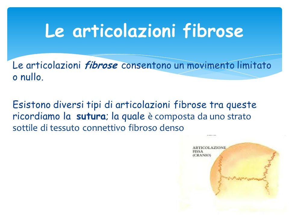 Le articolazioni fibrose Le articolazioni fibrose consentono un movimento limitato o nullo. Esistono diversi tipi di articolazioni fibrose tra queste