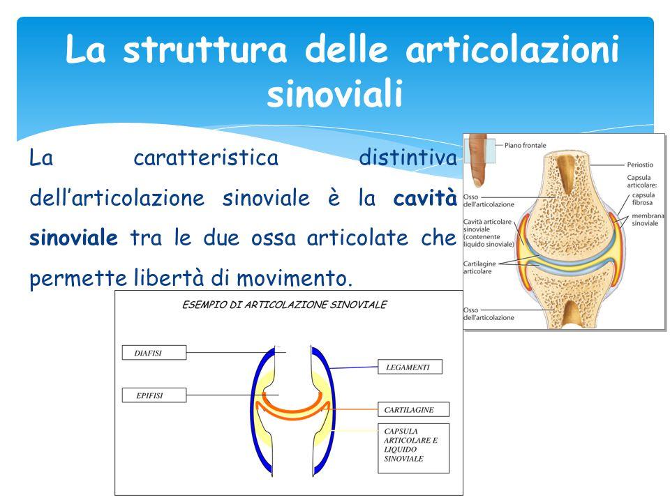 La caratteristica distintiva dell'articolazione sinoviale è la cavità sinoviale tra le due ossa articolate che permette libertà di movimento. La strut