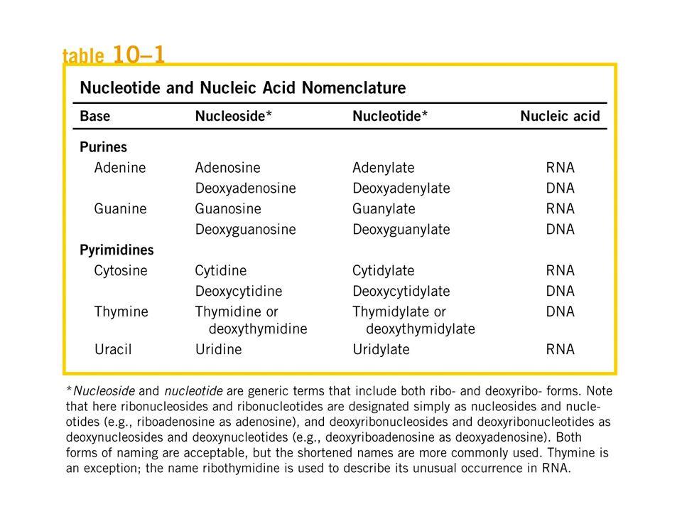 Composizioni delle basi nel DNA: Composizione caratteristica di una data specie e uguale in tutti i tessuti di quella specie Somma basi puriniche = somma basi pirimidiniche, somma amminobasi = somma chetobasi Quantità equimolecolari di A e T e C e G, rispettivamente