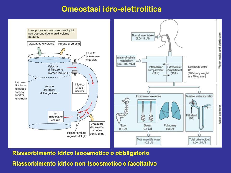 Omeostasi idro-elettrolitica Riassorbimento idrico isoosmotico o obbligatorio Riassorbimento idrico non-isoosmotico o facoltativo
