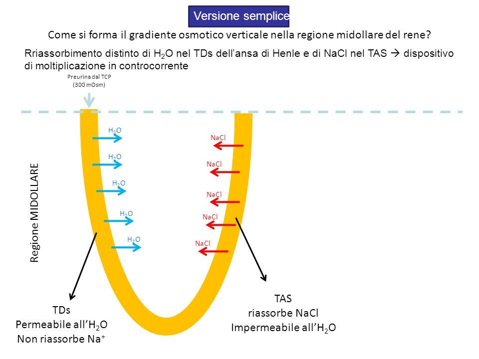 Come si forma il gradiente osmotico verticale nella regione midollare del rene.