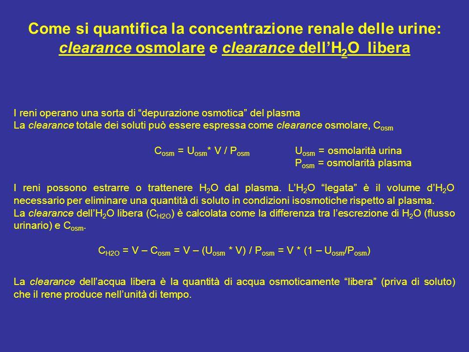 Come si quantifica la concentrazione renale delle urine: clearance osmolare e clearance dell'H 2 O libera I reni operano una sorta di depurazione osmotica del plasma La clearance totale dei soluti può essere espressa come clearance osmolare, C osm C osm = U osm * V / P osm U osm = osmolarità urina P osm = osmolarità plasma I reni possono estrarre o trattenere H 2 O dal plasma.