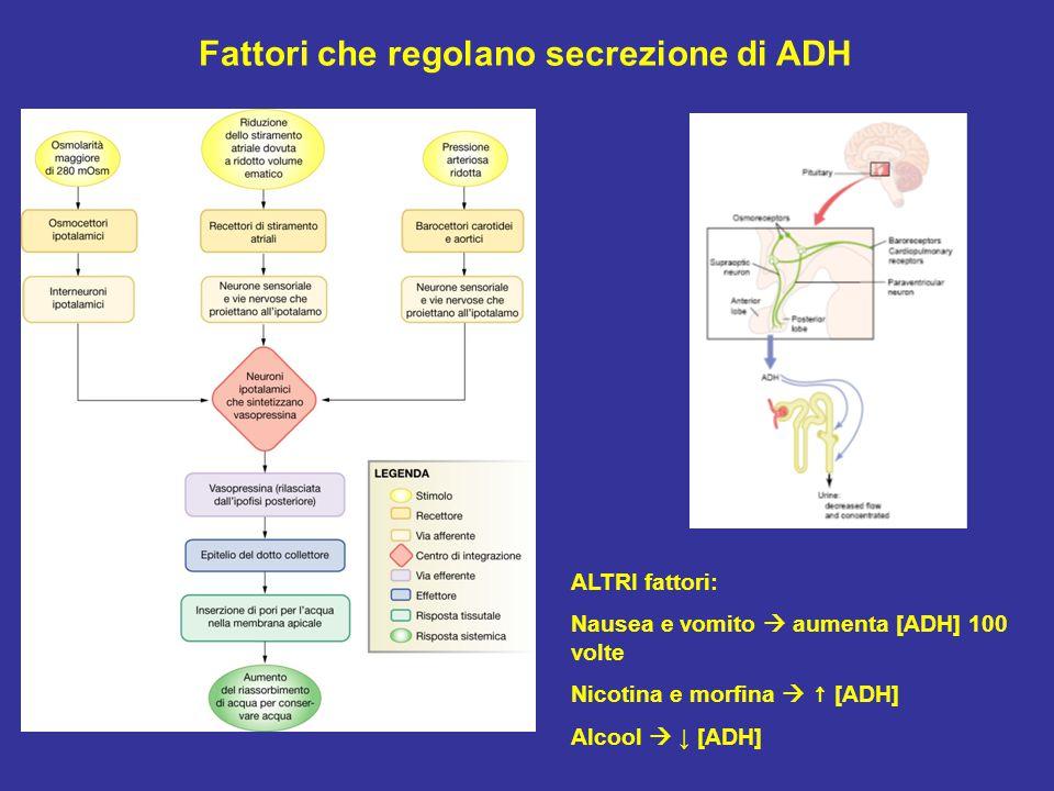 Fattori che regolano secrezione di ADH ALTRI fattori: Nausea e vomito  aumenta [ADH] 100 volte Nicotina e morfina  ↑ [ADH] Alcool  ↓ [ADH]