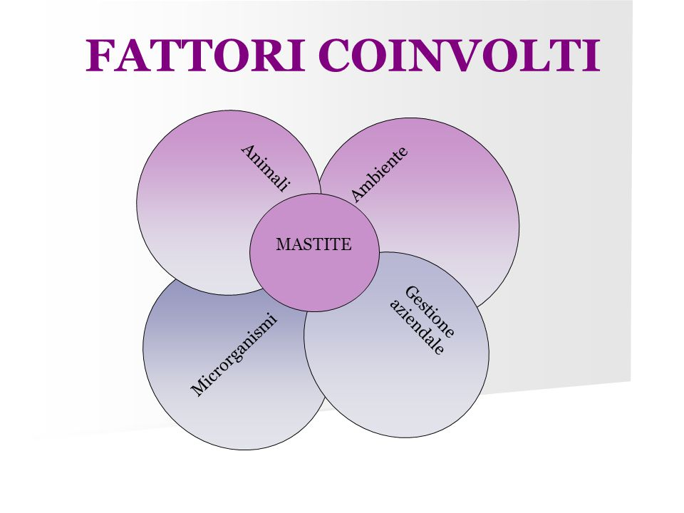 FATTORI COINVOLTI Microrganismi Ambiente Animali Gestione aziendale MASTITE