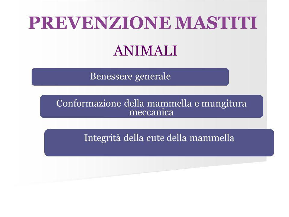 PREVENZIONE MASTITI ANIMALI Benessere generale Conformazione della mammella e mungitura meccanica Integrità della cute della mammella