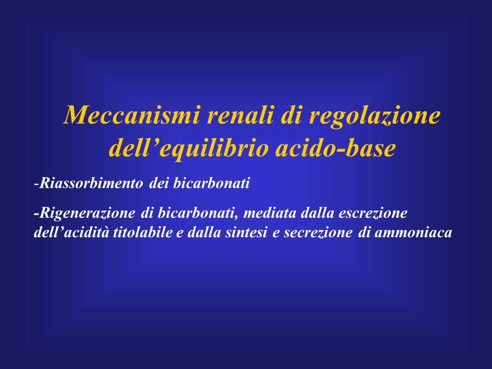 Meccanismi renali di regolazione dell'equilibrio acido-base -Riassorbimento dei bicarbonati -Rigenerazione di bicarbonati, mediata dalla escrezione de