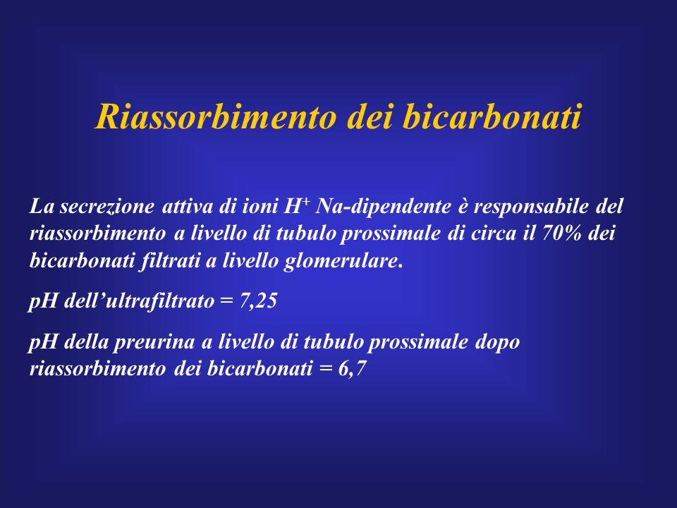 Riassorbimento dei bicarbonati La secrezione attiva di ioni H + Na-dipendente è responsabile del riassorbimento a livello di tubulo prossimale di circ