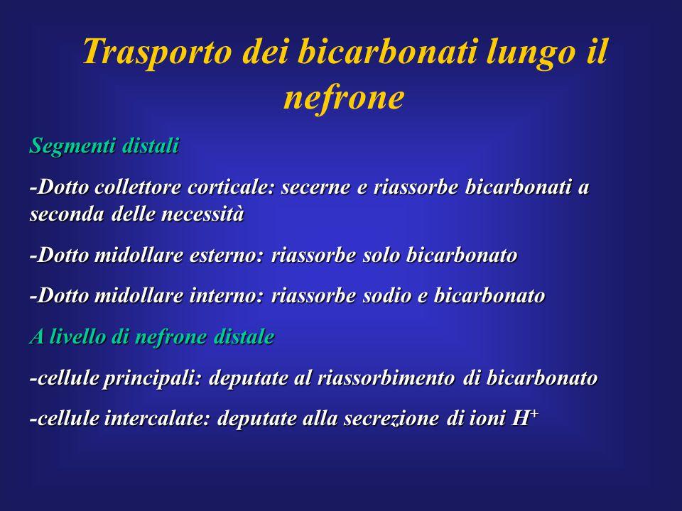 Trasporto dei bicarbonati lungo il nefrone Segmenti distali Dotto collettore corticale: secerne e riassorbe bicarbonati a seconda delle necessità -Dot