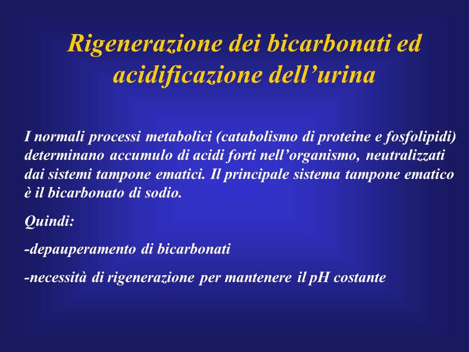 Rigenerazione dei bicarbonati ed acidificazione dell'urina I normali processi metabolici (catabolismo di proteine e fosfolipidi) determinano accumulo