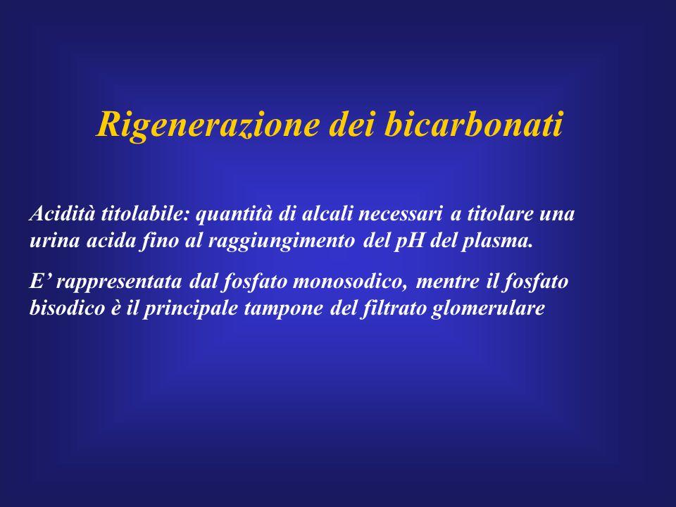 Rigenerazione dei bicarbonati Acidità titolabile: quantità di alcali necessari a titolare una urina acida fino al raggiungimento del pH del plasma. E'