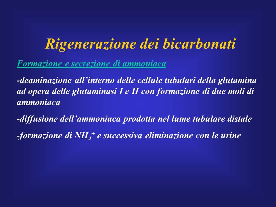 Rigenerazione dei bicarbonati Formazione e secrezione di ammoniaca -deaminazione all'interno delle cellule tubulari della glutamina ad opera delle glu