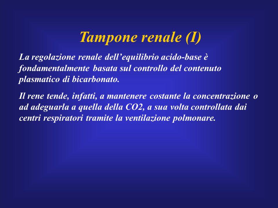 Tampone renale (I) La regolazione renale dell'equilibrio acido-base è fondamentalmente basata sul controllo del contenuto plasmatico di bicarbonato. I