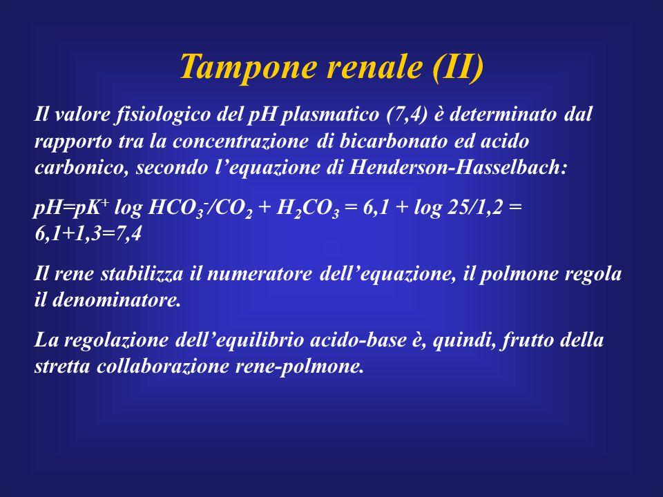 Tampone renale (II) Il valore fisiologico del pH plasmatico (7,4) è determinato dal rapporto tra la concentrazione di bicarbonato ed acido carbonico,