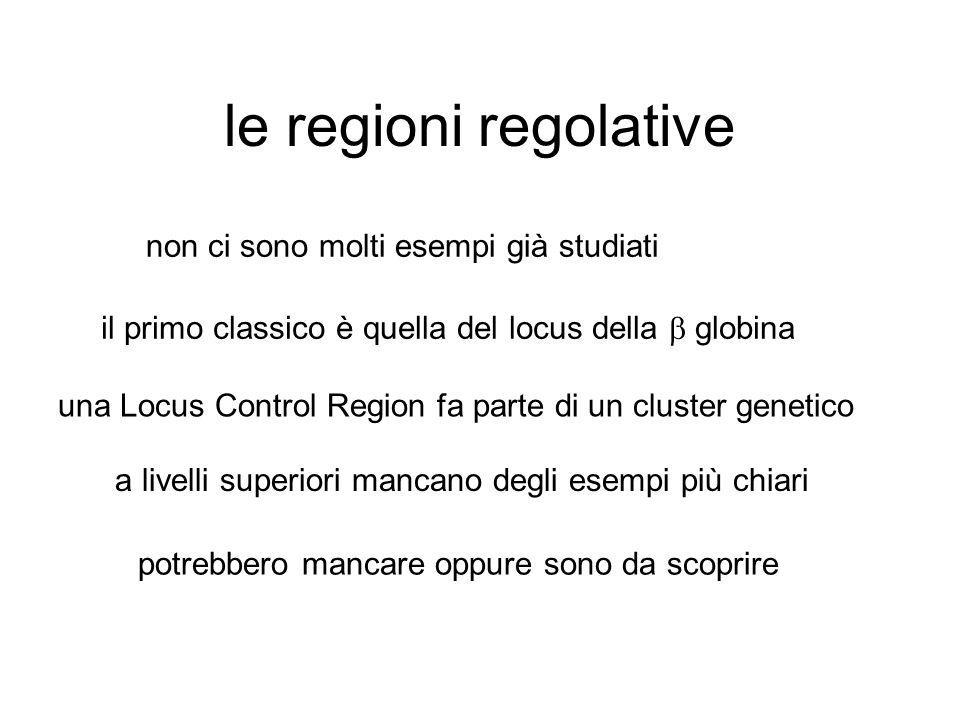 le regioni regolative non ci sono molti esempi già studiati il primo classico è quella del locus della  globina una Locus Control Region fa parte di