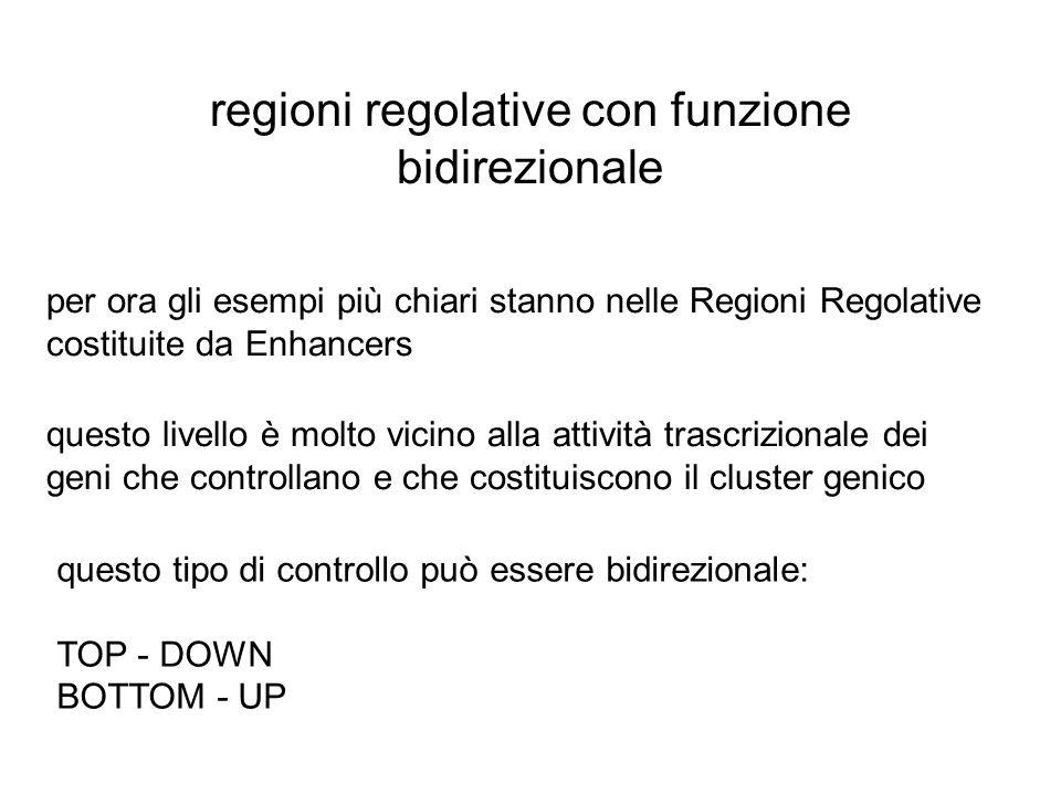regioni regolative con funzione bidirezionale per ora gli esempi più chiari stanno nelle Regioni Regolative costituite da Enhancers questo livello è m