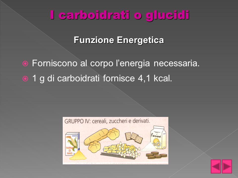  Forniscono al corpo l'energia necessaria.  1 g di carboidrati fornisce 4,1 kcal. Funzione Energetica