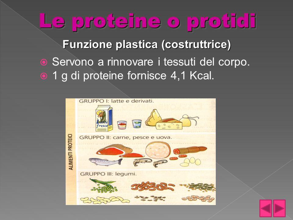  Servono a rinnovare i tessuti del corpo.  1 g di proteine fornisce 4,1 Kcal. Funzione plastica (costruttrice)
