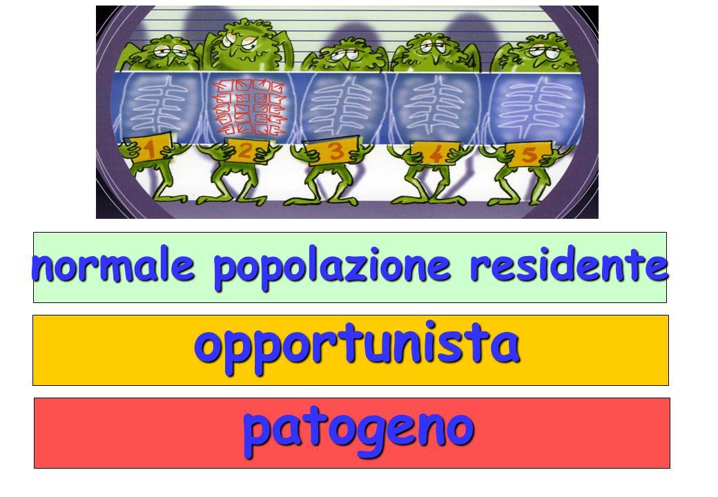 opportunista opportunista patogeno patogeno normale popolazione residente