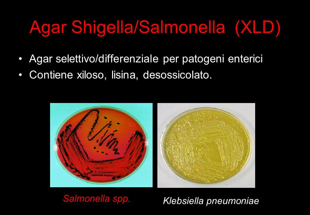 20 Agar Shigella/Salmonella (XLD) Agar selettivo/differenziale per patogeni enterici Contiene xiloso, lisina, desossicolato.
