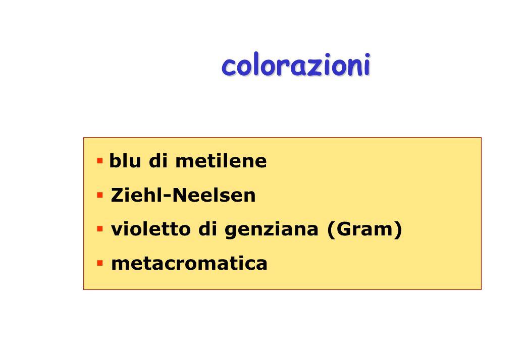 colorazioni  blu di metilene  Ziehl-Neelsen  violetto di genziana (Gram)  metacromatica