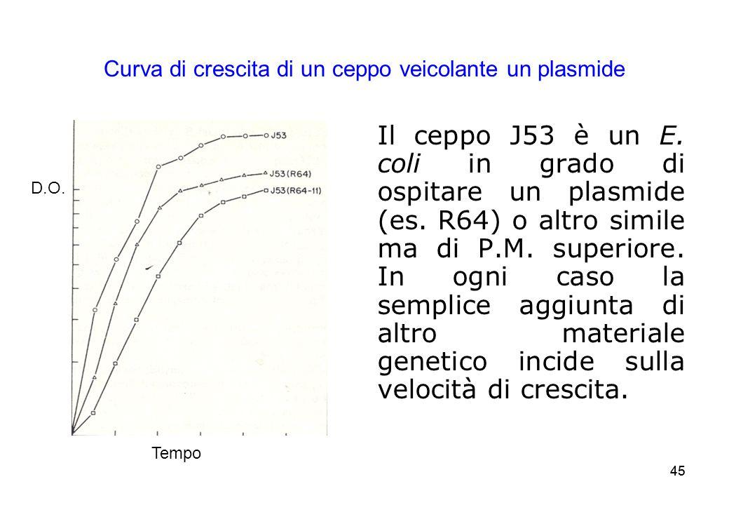 45 Curva di crescita di un ceppo veicolante un plasmide Il ceppo J53 è un E. coli in grado di ospitare un plasmide (es. R64) o altro simile ma di P.M.