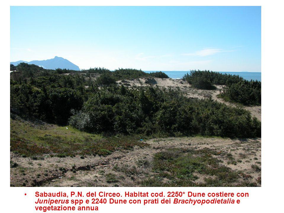 Sabaudia, P.N. del Circeo. Habitat cod. 2250* Dune costiere con Juniperus spp e 2240 Dune con prati dei Brachyopodietalia e vegetazione annua