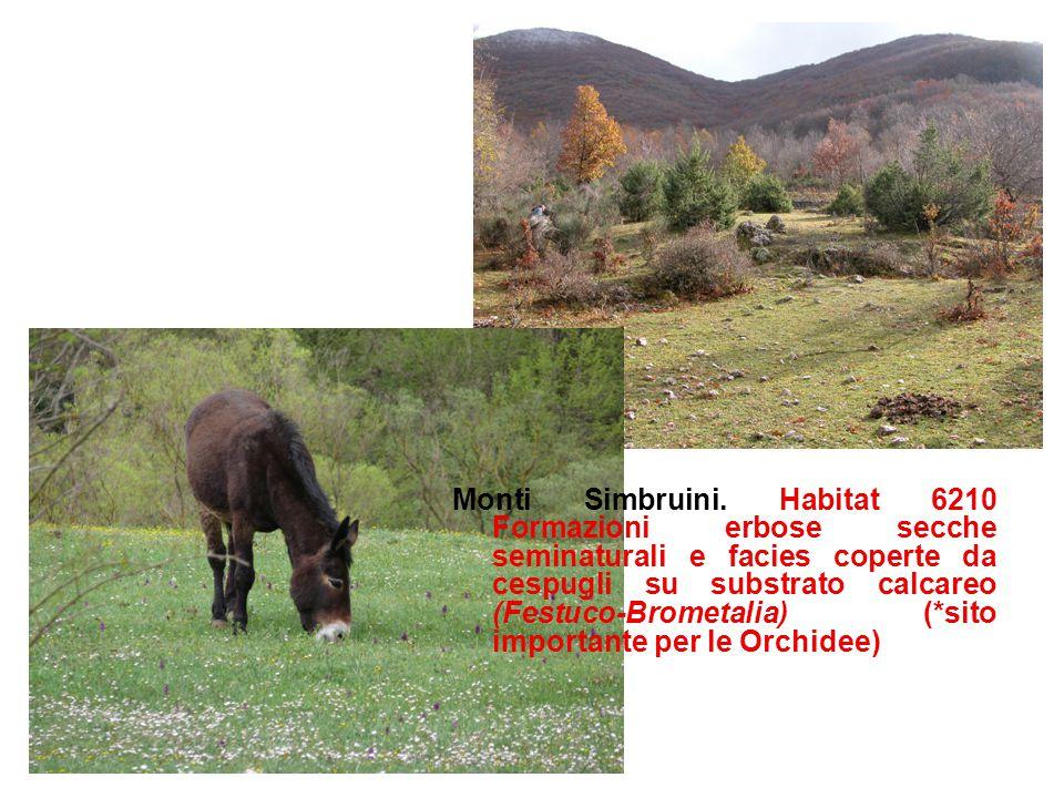 Monti Simbruini. Habitat 6210 Formazioni erbose secche seminaturali e facies coperte da cespugli su substrato calcareo (Festuco-Brometalia) (*sito imp