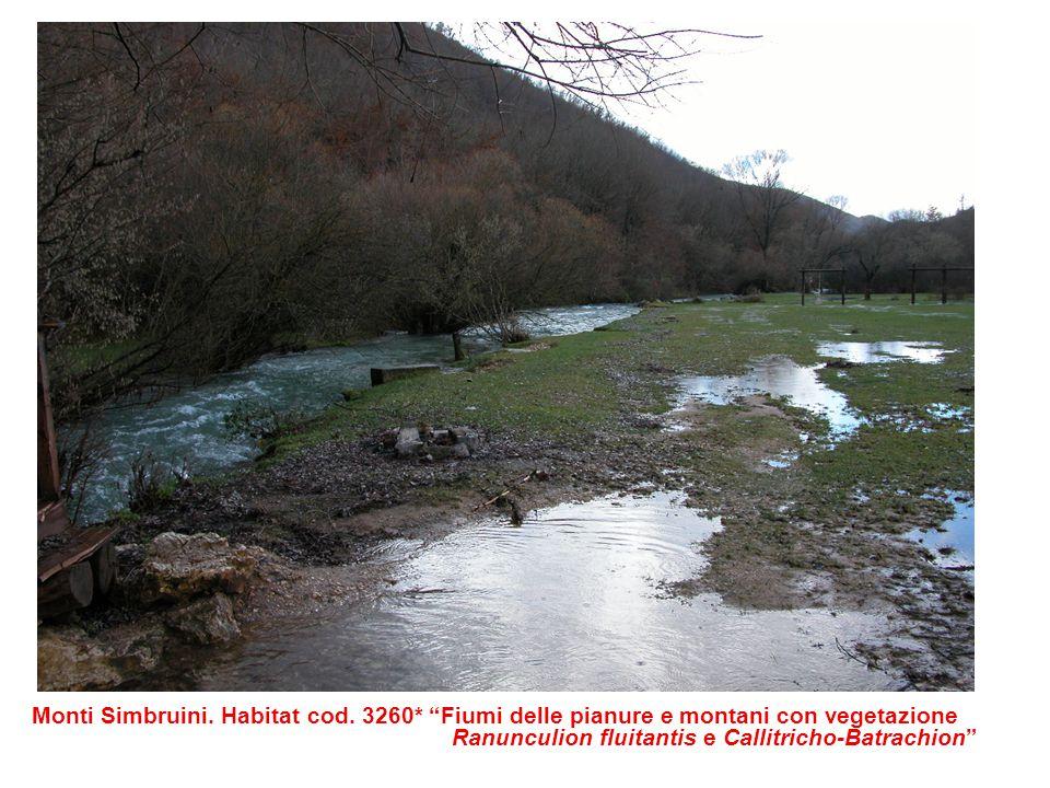 """Monti Simbruini. Habitat cod. 3260* """"Fiumi delle pianure e montani con vegetazione Ranunculion fluitantis e Callitricho-Batrachion"""""""