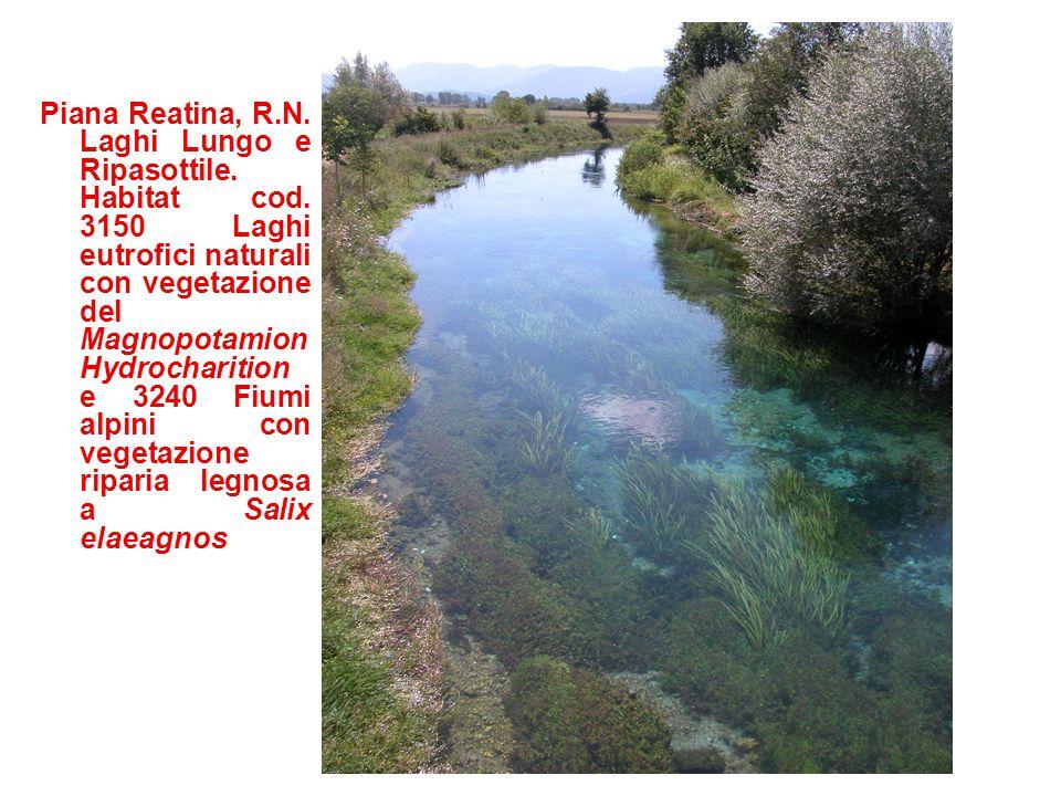 Piana Reatina, R.N. Laghi Lungo e Ripasottile. Habitat cod. 3150 Laghi eutrofici naturali con vegetazione del Magnopotamion Hydrocharition e 3240 Fium