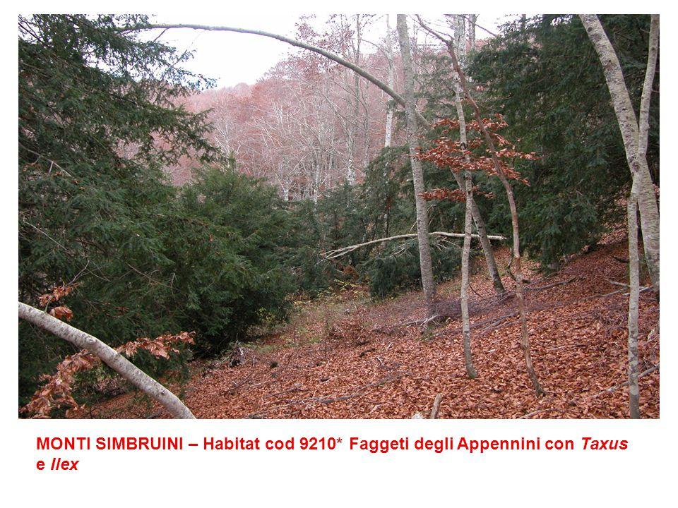 MONTI SIMBRUINI – Habitat cod 9210* Faggeti degli Appennini con Taxus e Ilex