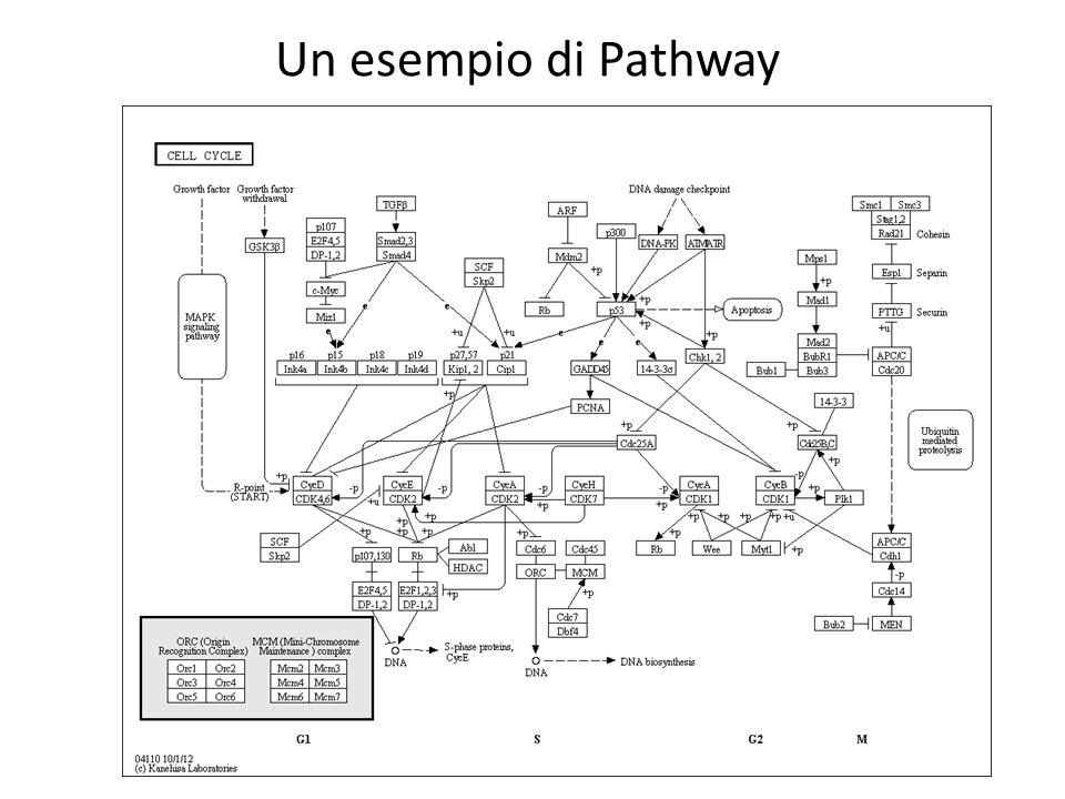 Un esempio di Pathway