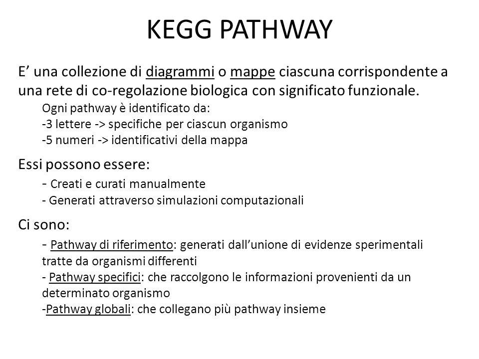 KEGG PATHWAY E' una collezione di diagrammi o mappe ciascuna corrispondente a una rete di co-regolazione biologica con significato funzionale. Ogni pa