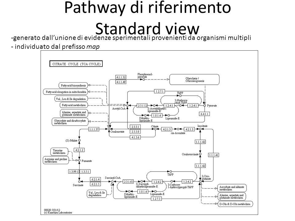 Pathway di riferimento Standard view -generato dall'unione di evidenze sperimentali provenienti da organismi multipli - individuato dal prefisso map