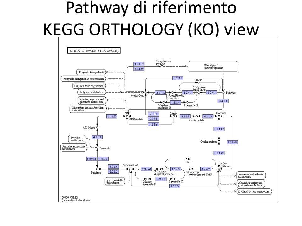 Pathway di riferimento KEGG ORTHOLOGY (KO) view I geni assegnati ad un KO group sono evidenziati in viola