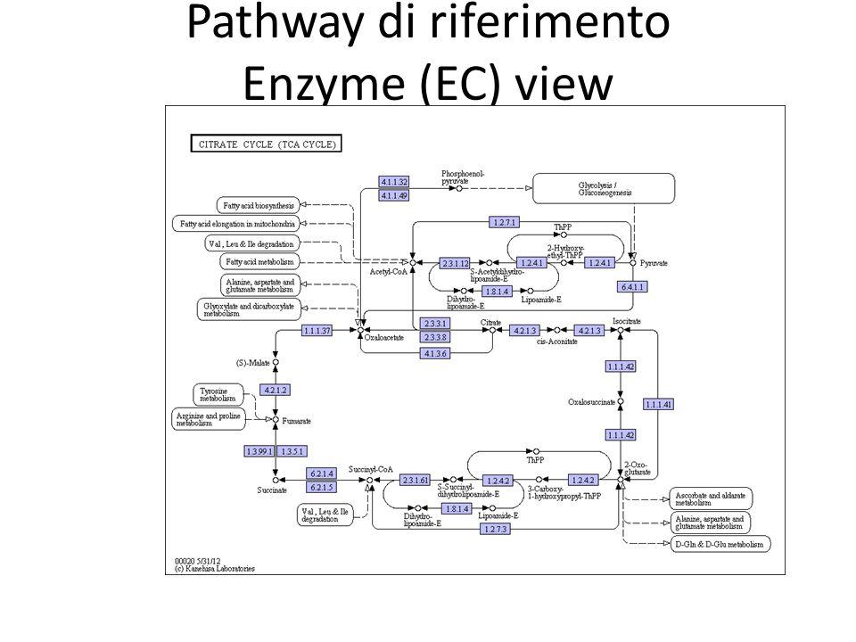 Pathway di riferimento Enzyme (EC) view I geni assegnati ad un KO group sono evidenziati in viola