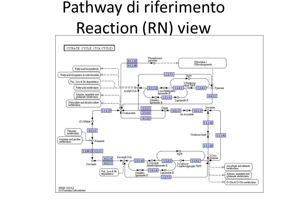 Pathway di riferimento Reaction (RN) view I geni assegnati ad un KO group sono evidenziati in viola