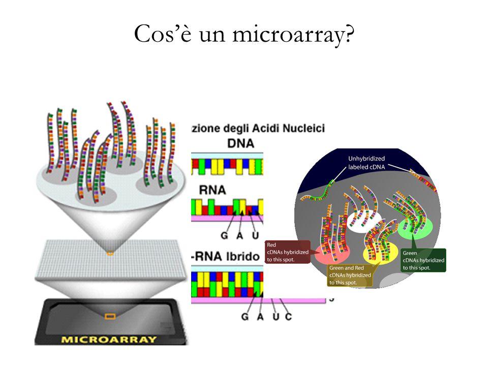 Cos'è un microarray?