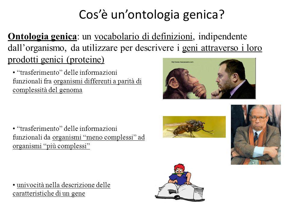 Cos'è un'ontologia genica? Ontologia genica: un vocabolario di definizioni, indipendente dall'organismo, da utilizzare per descrivere i geni attravers