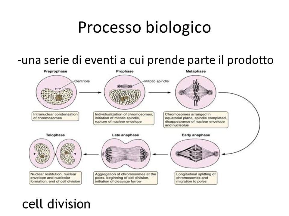 Processo biologico -una serie di eventi a cui prende parte il prodotto cell division