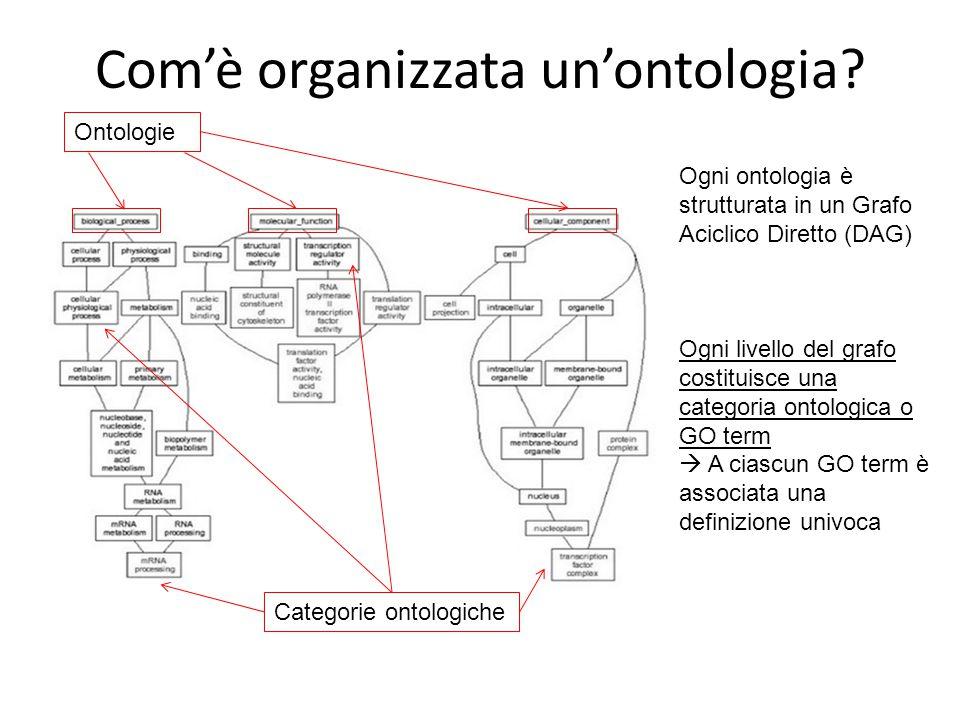 Com'è organizzata un'ontologia? Ontologie Categorie ontologiche Ogni ontologia è strutturata in un Grafo Aciclico Diretto (DAG) Ogni livello del grafo
