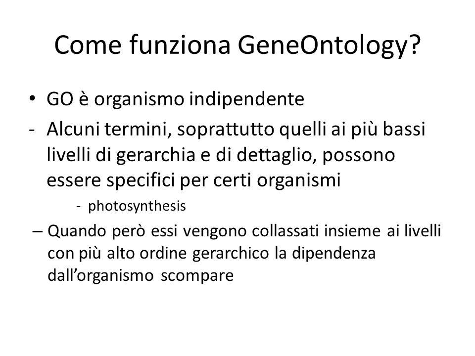 Come funziona GeneOntology? GO è organismo indipendente -Alcuni termini, soprattutto quelli ai più bassi livelli di gerarchia e di dettaglio, possono