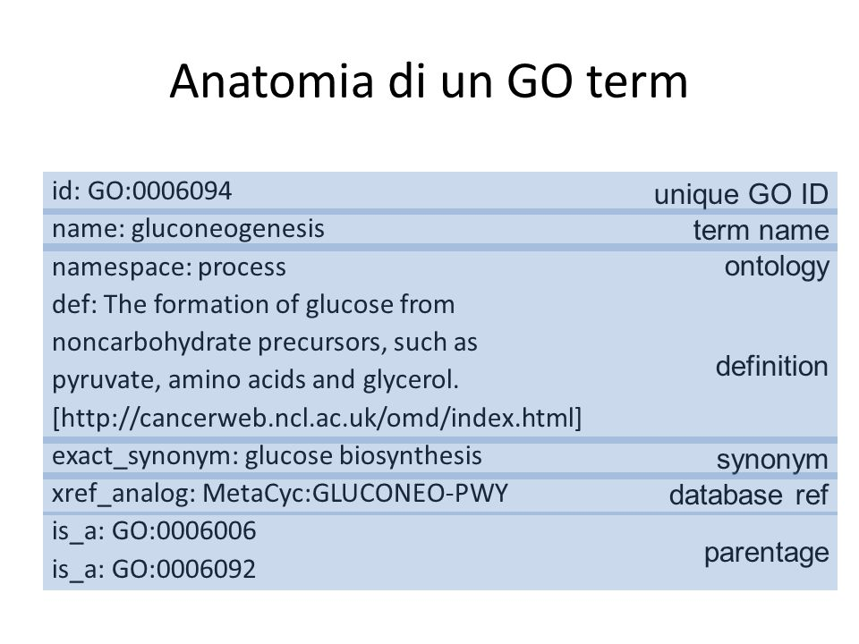 Anatomia di un GO term id: GO:0006094 name: gluconeogenesis namespace: process def: The formation of glucose from noncarbohydrate precursors, such as pyruvate, amino acids and glycerol.