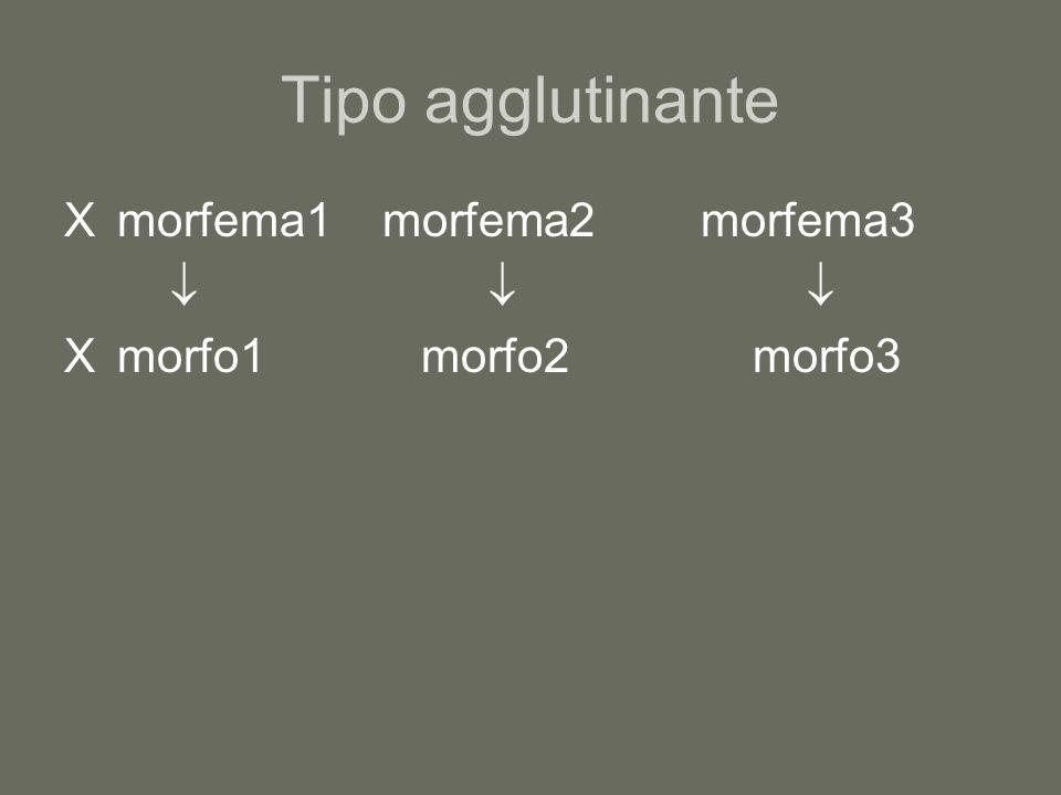 Tipo agglutinante X morfema1morfema2morfema3  X morfo1 morfo2 morfo3