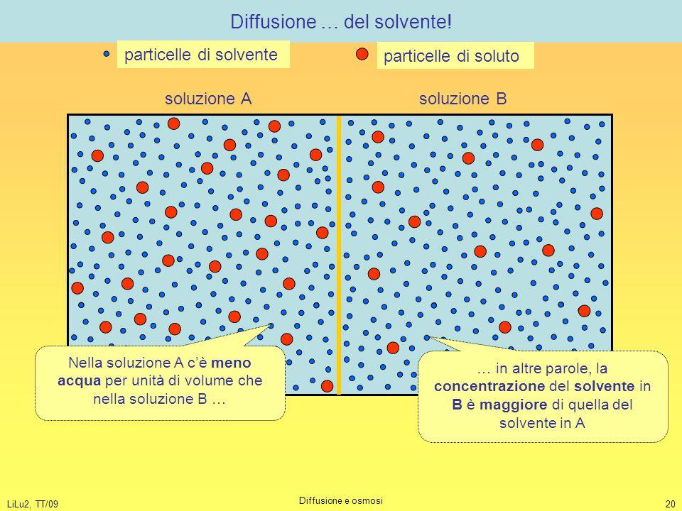 LiLu2, TT/09 Diffusione e osmosi 20 Diffusione … del solvente! soluzione A soluzione B Nella soluzione A c'è meno acqua per unità di volume che nella