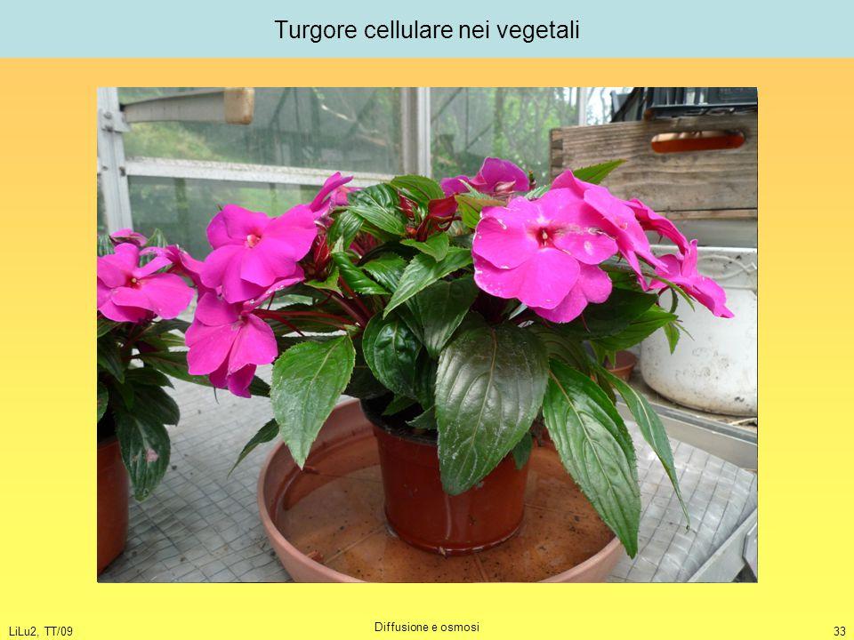 LiLu2, TT/09 Diffusione e osmosi 33 Turgore cellulare nei vegetali