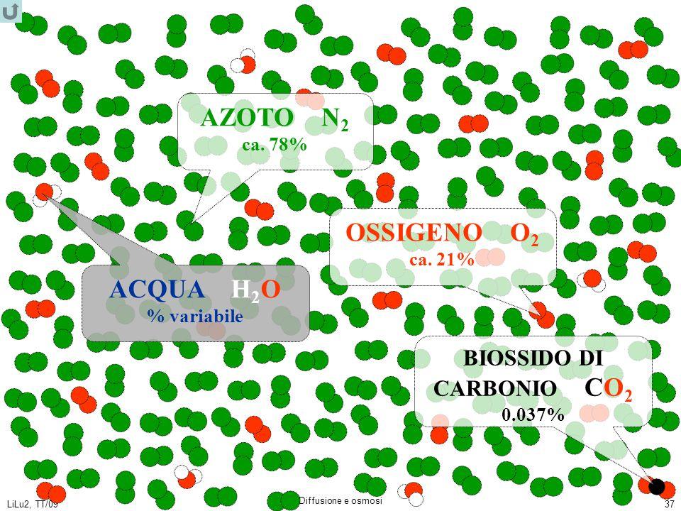 LiLu2, TT/09 Diffusione e osmosi 37 AZOTO N 2 ca. 78% OSSIGENO O 2 ca. 21% ACQUA H 2 O % variabile BIOSSIDO DI CARBONIO CO 2 0.037%